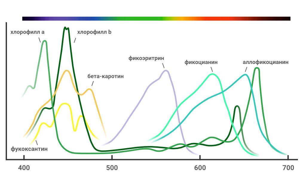 Спектрограмма поглощения энергии света