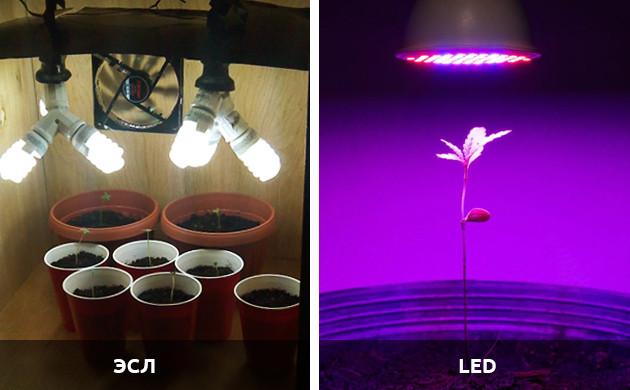 свет для ростка